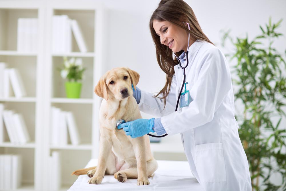 Appello dei Veterinari di tutta Europa: vaccinateci!